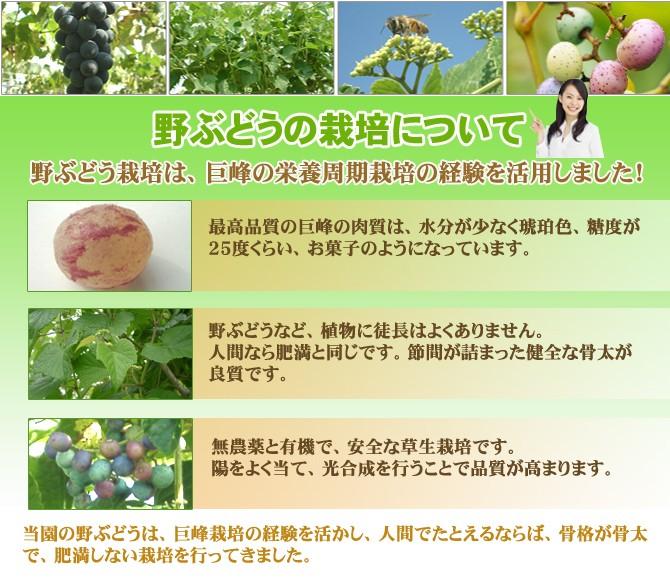 nobu_img11 670x580